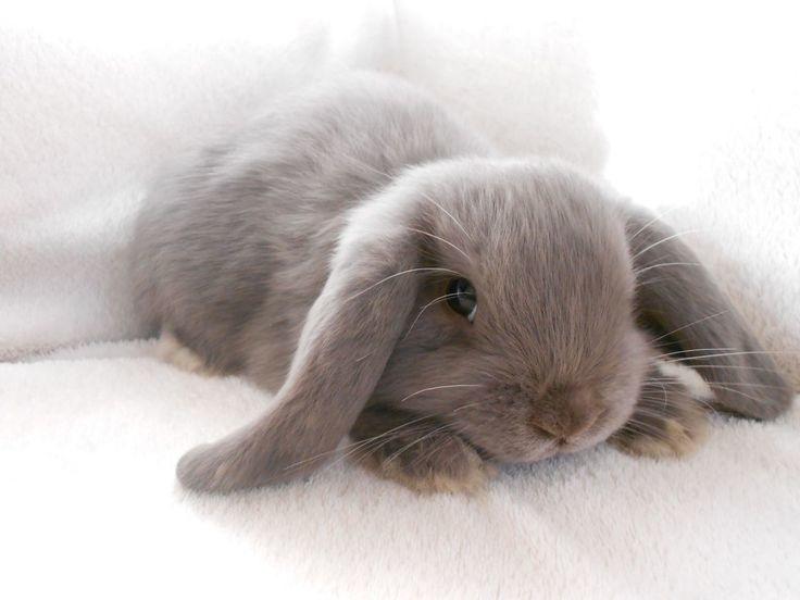 Grey_bunnies.jpg